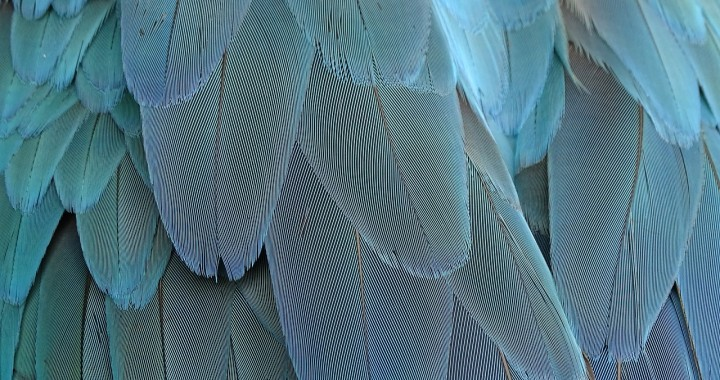 feather-1952382_1280